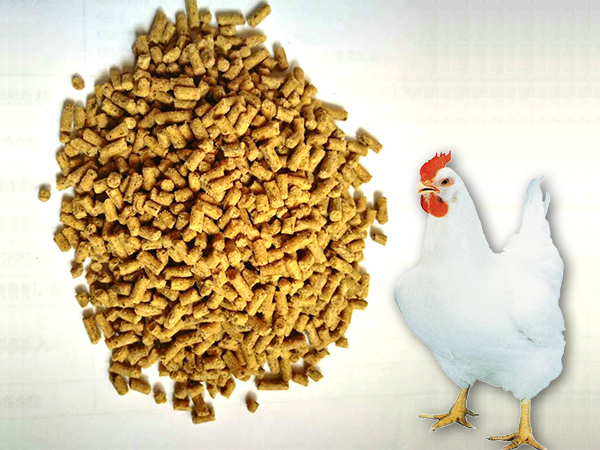 Adult chicken feed